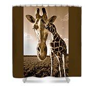 Nosey Giraffe Shower Curtain