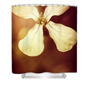 Nostalgic Wildflowers Shower Curtain