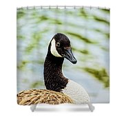 Not Grey Goose Shower Curtain