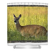 Not Just Bears Shower Curtain