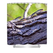 Not One But Three --- Snakes Shower Curtain