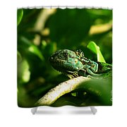 Not Quite Hidden Iguana Shower Curtain