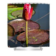 Not Yet In Bloom Shower Curtain