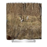 Nothing But White Tails Shower Curtain