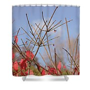 November 2015 Shower Curtain
