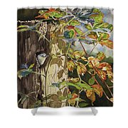 Nuthatch And Creeper Shower Curtain