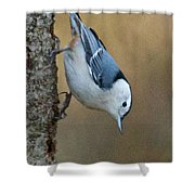 Nuthatch In Profile Shower Curtain