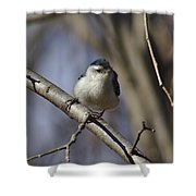 Nuthatch On Perch Shower Curtain
