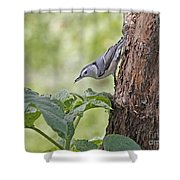 Nuthatch On The Move Shower Curtain