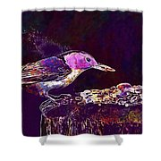 Nuthatch White Breasted Nuthatch  Shower Curtain