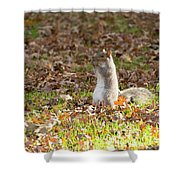 Nuts For Fall Shower Curtain
