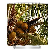 Nuts On Tree  Shower Curtain