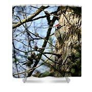 Nuttalls Woodpecker  Shower Curtain