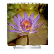 Nymphaea Shower Curtain