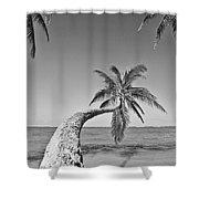 Oahu Palms Shower Curtain by Tomas del Amo - Printscapes