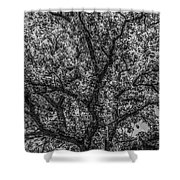 Oak Abstract Shower Curtain
