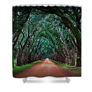 Oak Alley Road Shower Curtain by Perry Webster