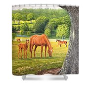 Oak And Chestnuts Shower Curtain