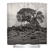 Oak In Rock Field Shower Curtain