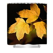 Oak Leaf Trio Shower Curtain