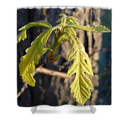 Oak Leaves In May Dawn Light Shower Curtain