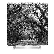 Oak Lined Drive Way, Coastal, South Carolina  Shower Curtain