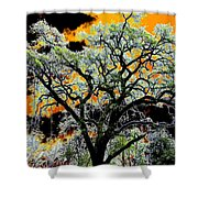 Oak Oasis Shower Curtain