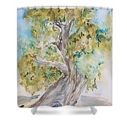 Oak Of The Golden Dream Shower Curtain