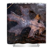 Oak Preservation Shower Curtain