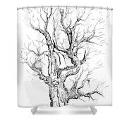 Oak Tree Abstract Study Shower Curtain