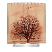 Oak Tree Alone  Shower Curtain