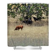 Oak Tree And The Cows Shower Curtain