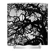 Oak Tree In Winter Detail - Amador County, California Shower Curtain