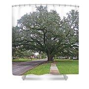 Oak  Tree  Jennings  Louisiana Shower Curtain
