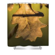 Oak Tree Leaf Shower Curtain