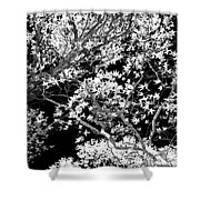 Oak Tree Light Shower Curtain