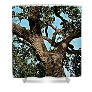 Oak Tree Two Shower Curtain