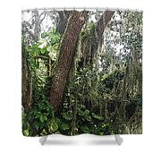 Oak Tree With Spanish Moss Shower Curtain