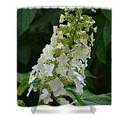 Oakleaf Hydrangea Shower Curtain
