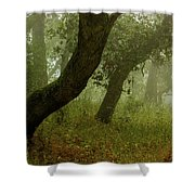 Oaks Off The Trail Shower Curtain