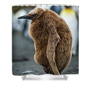 Oakum Boy King Penguin Asleep On Beach Shower Curtain