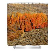 Oasis Of Beauty Shower Curtain