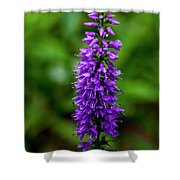 Obedient Plant Shower Curtain