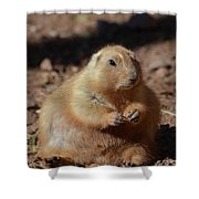 Obese Prairie Dog Sitting In A Pile Of Dirt Shower Curtain