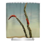 Ocatillo Shower Curtain