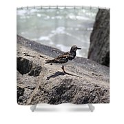 Ocean Bird Shower Curtain