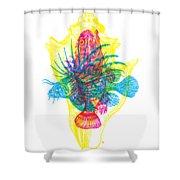 Ocean Creatures Shower Curtain
