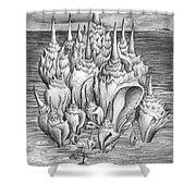 Ocean Fantasy. Huge Shells Shower Curtain