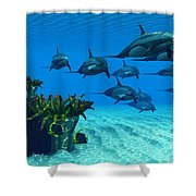 Ocean Striped Dolphins Shower Curtain
