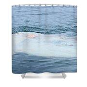 Ocean Sunfish Shower Curtain